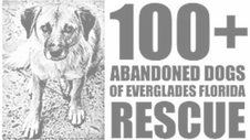 100 Abandoned Dogs of Everglades Florida Rescue
